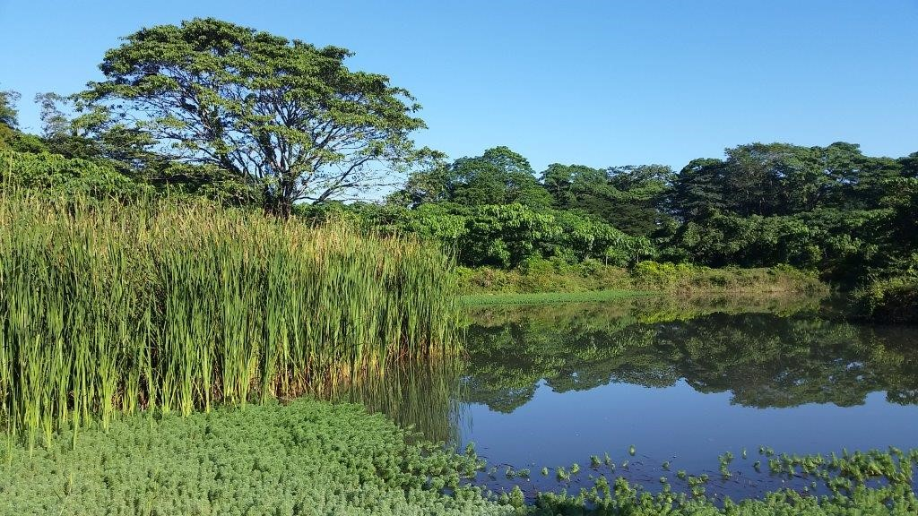 Wetland at Falcondo's facilities